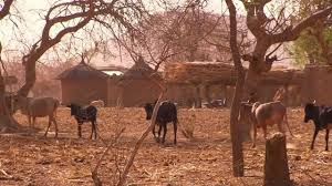 drought and livestock
