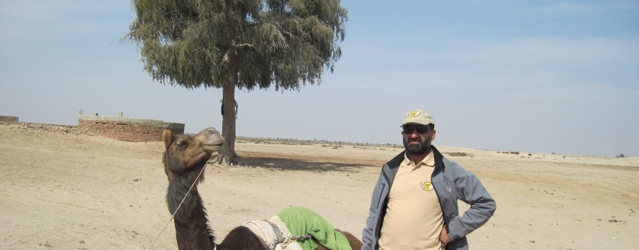 Camel Milk can Help in Shark Conservation. Japan can be the Possible Market for CamelMilk