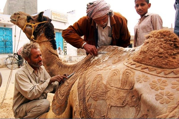 Barber making design on the camel body in Rajasthan.jpg
