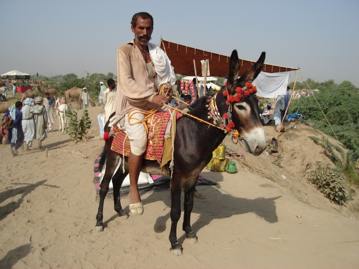 The Donkey~ Also a Good Riding Animal