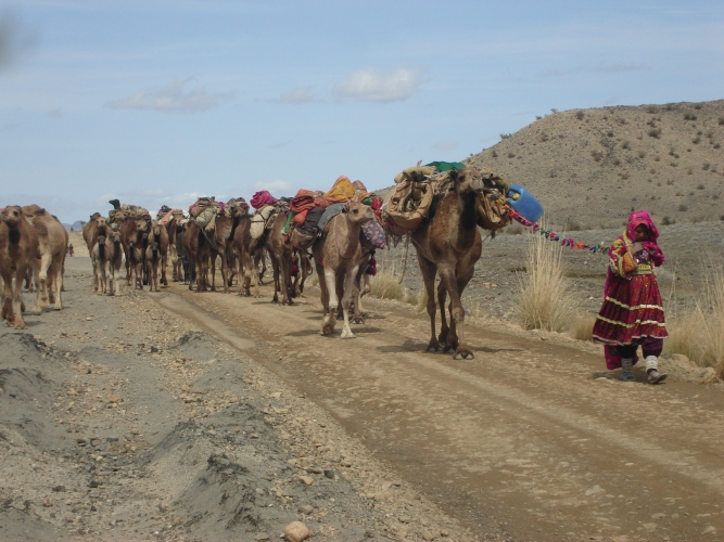 Pashtoon nomads and camel