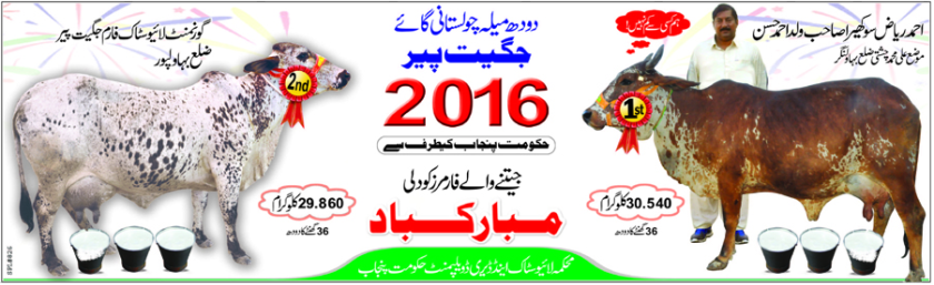 Cholistani milk winners 2016.png
