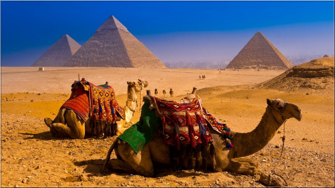 Camal-Ship-Of-The-Desert-Travel-Egyptian-Natural-Beauty4.jpg