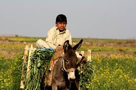 donkey and rural life..