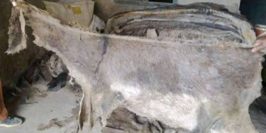 Wet-Salted-and-Dried-Donkey-Hides-Goat.jpg