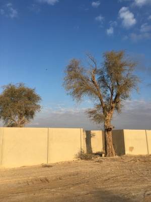 The government and the people of the UAE prioritize native trees for conservation