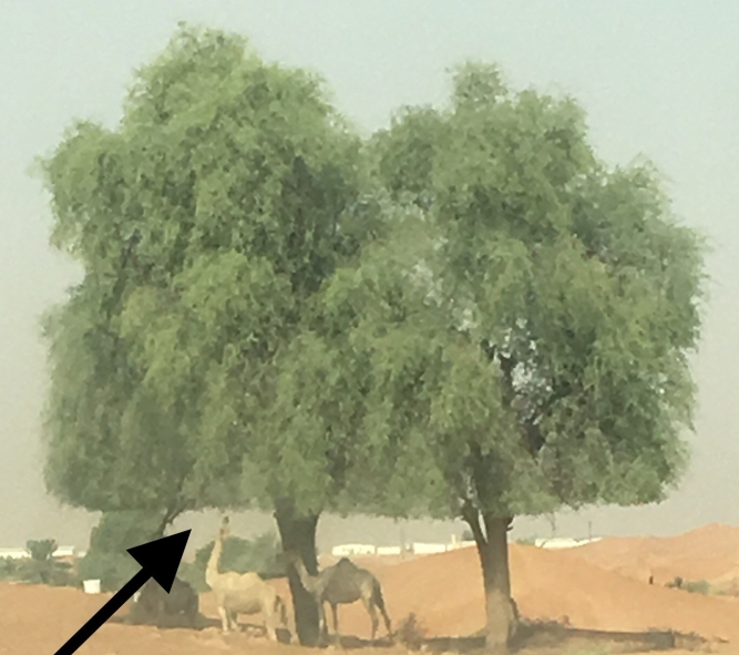 The camel Art of the Tree