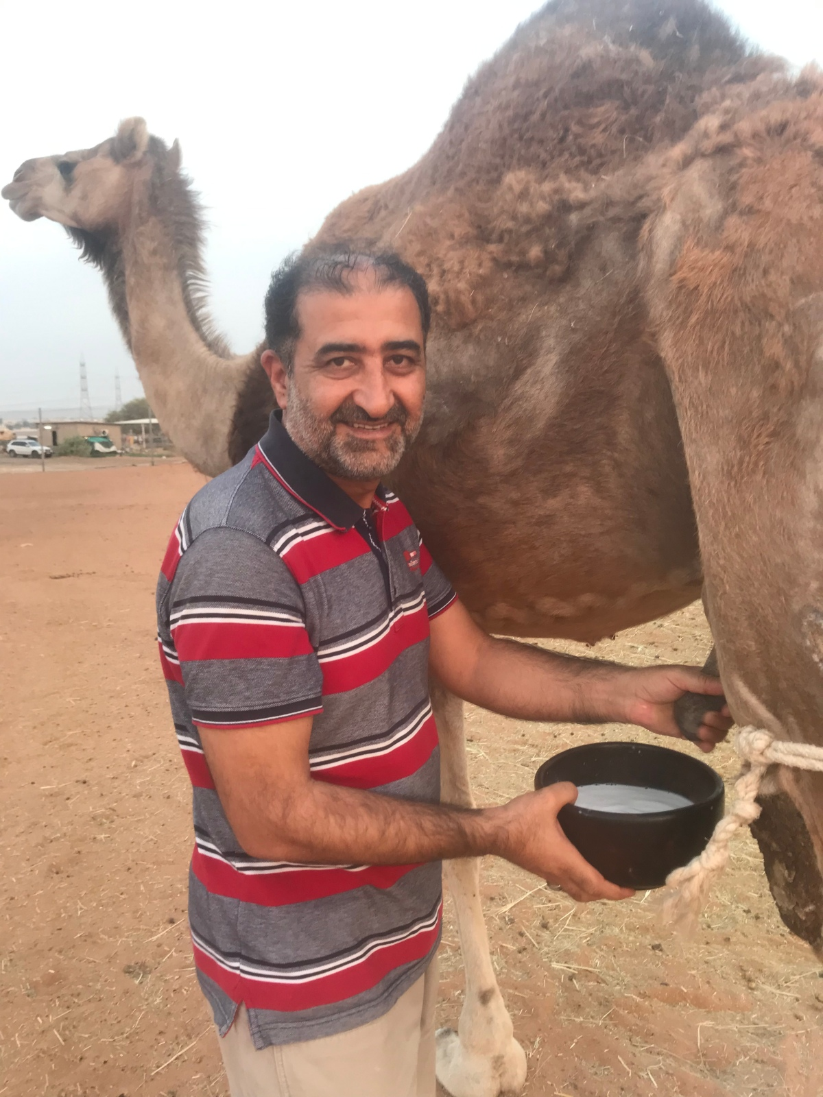 Camel Milk is Closest to the Human Milk