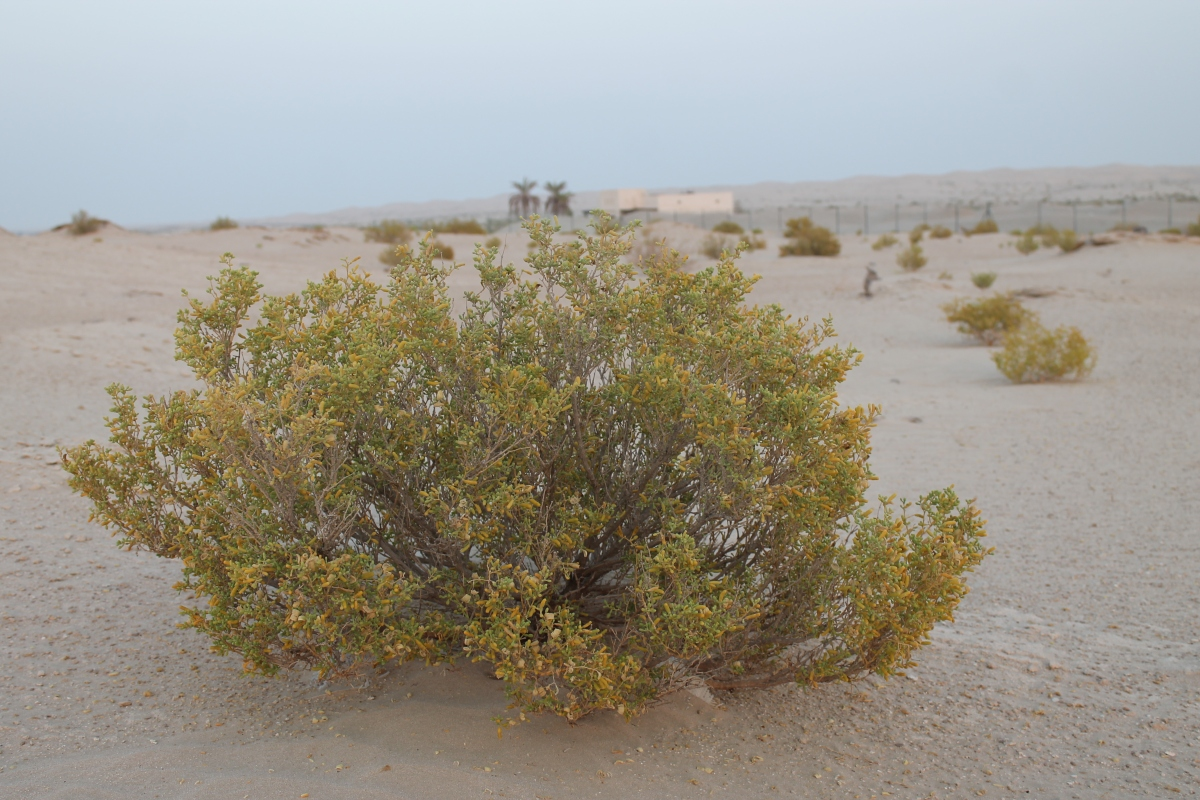 The Beautiful Plants of Beautiful White Desert