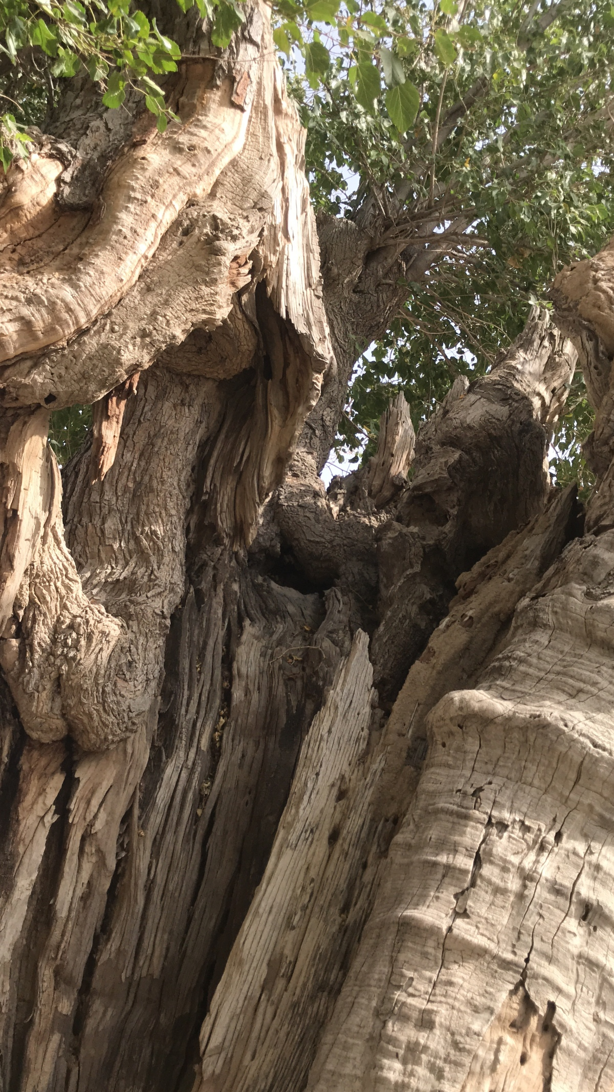 The Ancient Trees Heritage of Borai ~ Arya Warsha