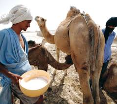 New Solutions to Prolong the Shelf life of the Camel Milk
